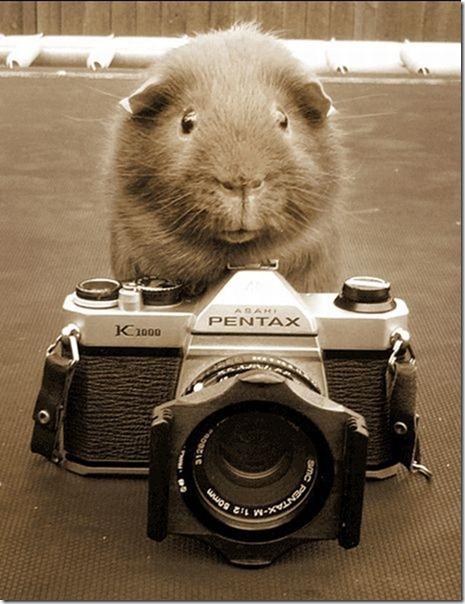 cute-funny-animals-24