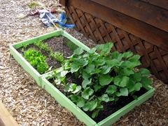 Veggies 6-24
