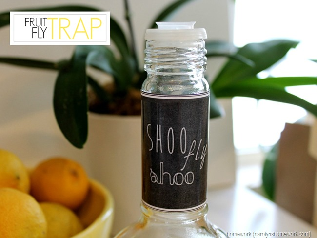 star fruit homemade fruit fly trap