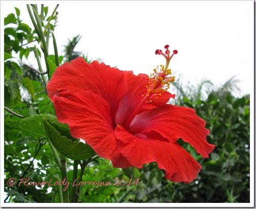 07-02-hibiscus