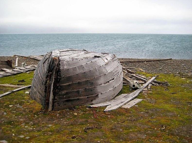 beluga-whale-bones-12