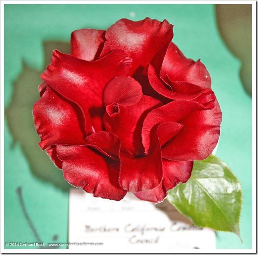 140302_Camellia_Society_Sacto_Show_033