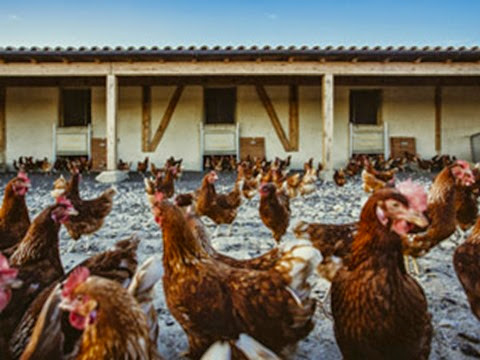 granja-de-gallinas-07_aa-arquitectura_300px