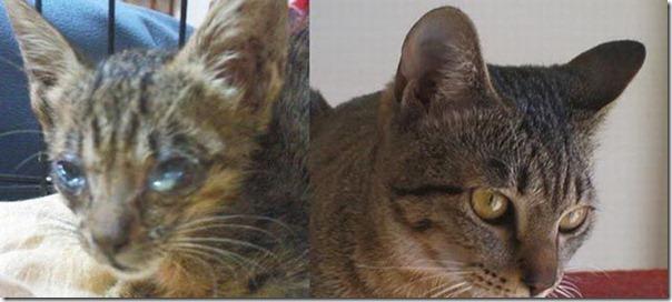 Animais Antes e Depois do Resgate (16)