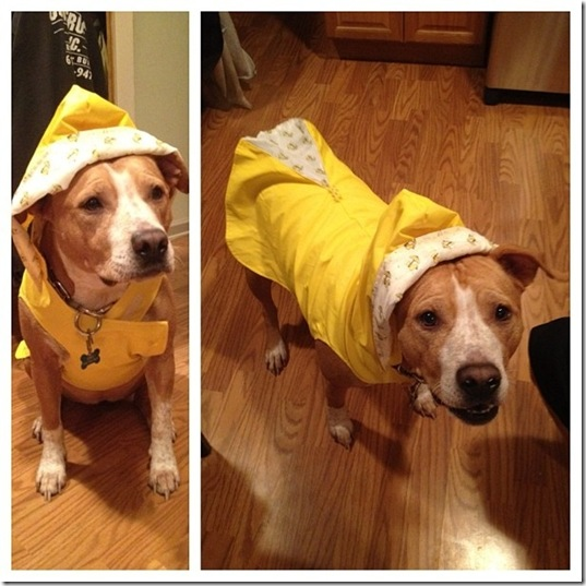 hurricane-sandy-dogs-24