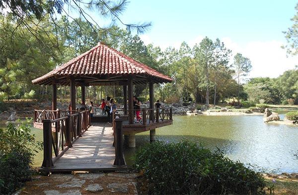 En el Jardín japonés del Jardín Botánico de la Habana