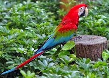 Amazing Pictures of Animals, Photo, Nature, Incredibel, Funny, Zoo, Red-and-green Macaw, ara chloropterus, Bird,  Alex.  (17)