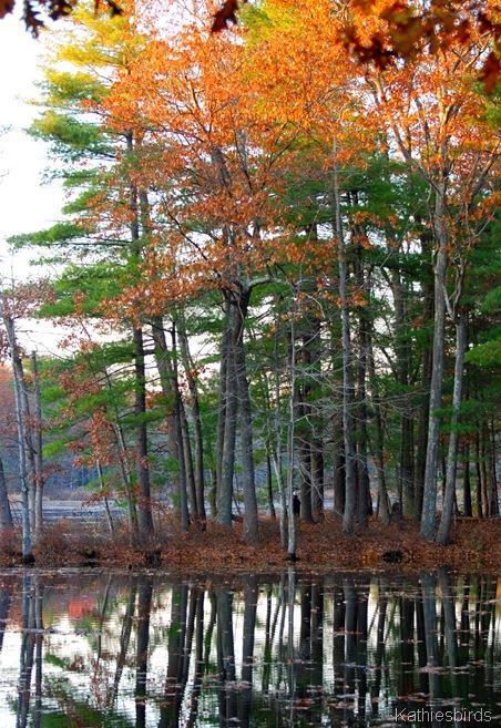 7. woodland-kab