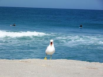Terrific Beach afternoon 061