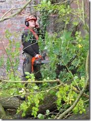 Tree clearance (11)