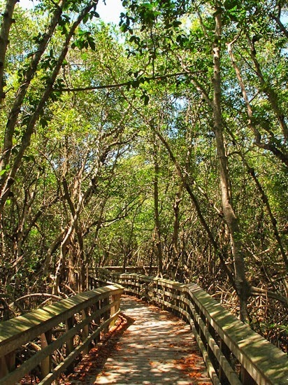 Everglades National Park by Bicycle West Lake Trail