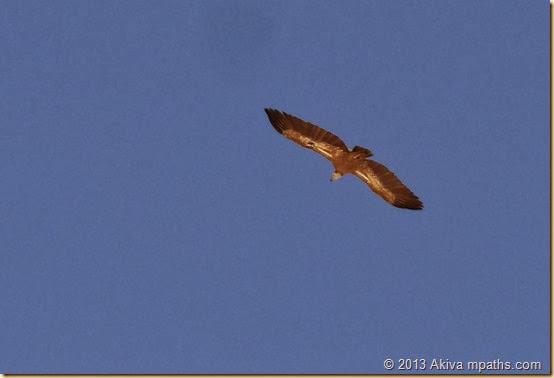 2013-10-24 Haviva Trip 053