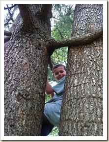 E in tree