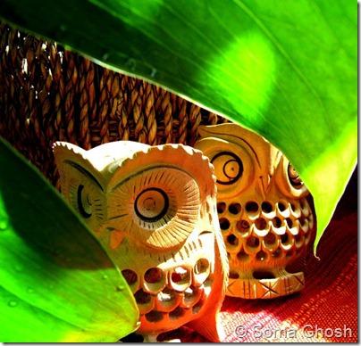 Owl9_Soma Ghosh