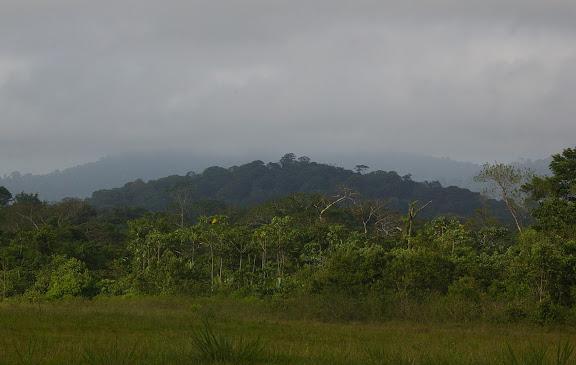 Saül (Guyane) : paysage près de la piste d'atterrissage. 1er décembre 2011. Photo : J.-M. Gayman