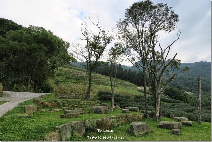 三峽熊空茶園 (17)