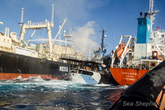 The Japan whale poachers' factory ship, the Nisshin Maru, rams the Bob Barker and sandwiches the Bob between itself and the fuel tanker Sun Laurel, causing extensive structural damage to the Bob Barker, 25 February 2013. Photo: Sea Shepherd Conservation Society
