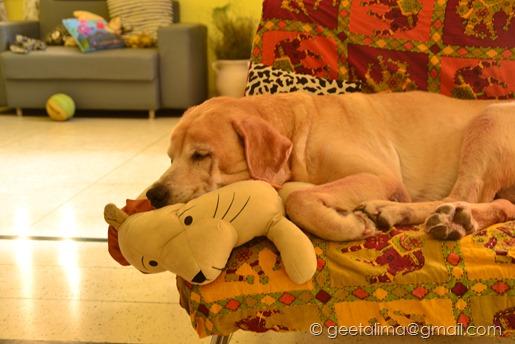 Senior Dog (2)