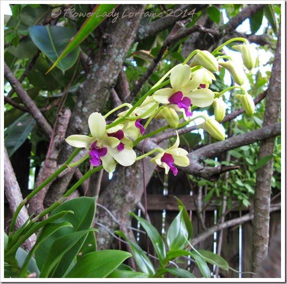 09-29-noid-orchids-doug