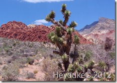 Red Rocks Canyon 006