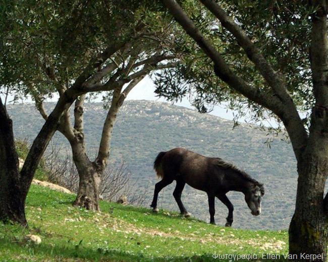 Η Ellen Van Kerpel βρήκε και φωτογράφισε τα άλογα του Αίνου