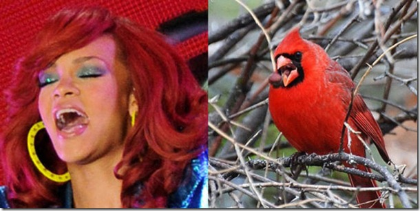 pop-stars-birds-7