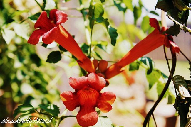 Flower6-11a