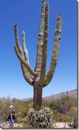 Saguaro big one...
