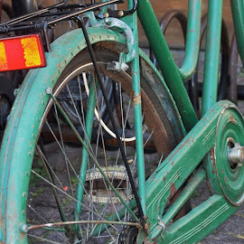 by Elana Mckivergan - Transportation Bicycles ( green, bicycle, popyacolour, happycolourtrip, mytravelgram, instawin, icatching, postcardgram, photowall, photolocker, contestgram, all_shots, eclectic_photos, fabshots, favshots, great_shots, heyfred_lookatthis )