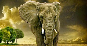 Elephant-big.jpg