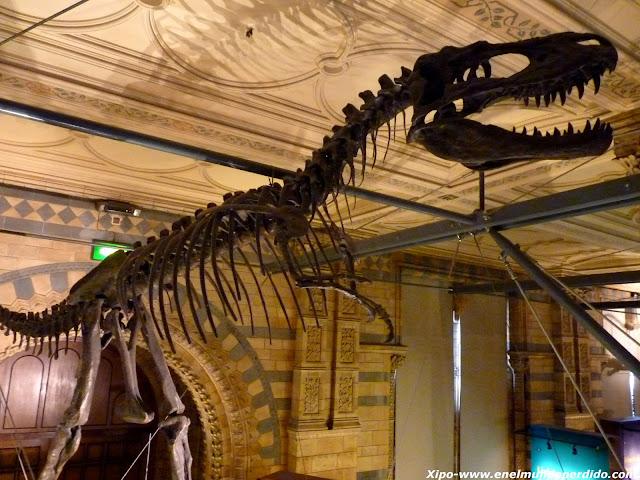 esqueleto-de-dinosaurio.JPG
