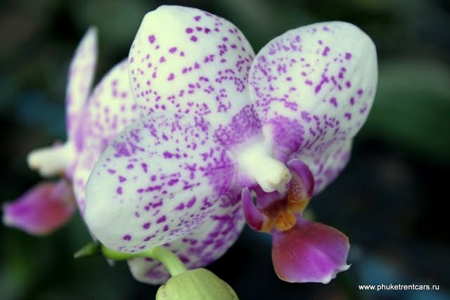 Сад орхидей (Orchid farm)