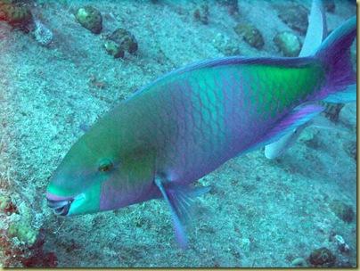EM Parrot Fish