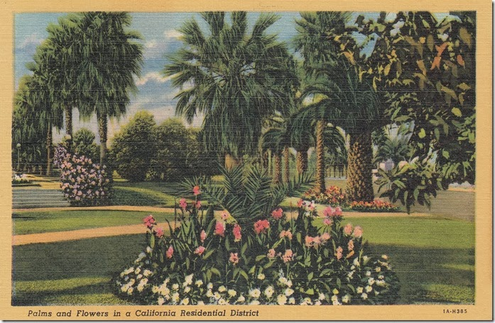 Palms and Flowers in a California Residential District Pg. 1