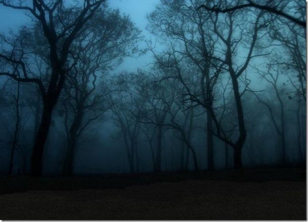 Florestas sombrias (6)