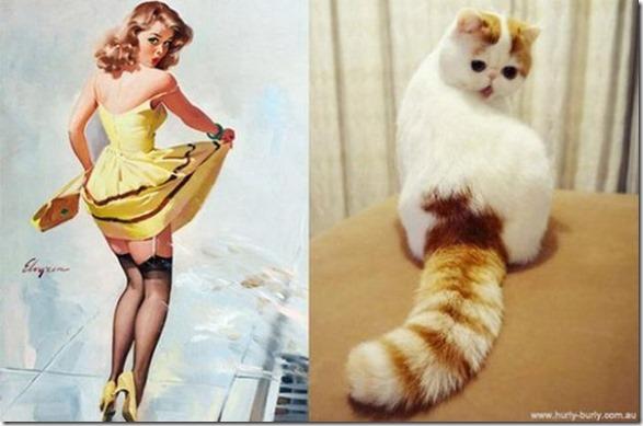 cats-pinup-models-4