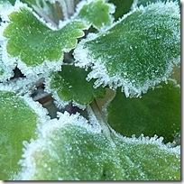 calendar frost