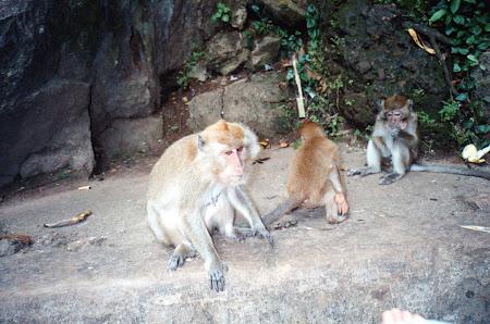 203. templul maimutelor.jpg