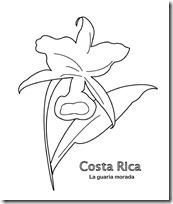 guaria morada costa Rica jugarycolorear 1