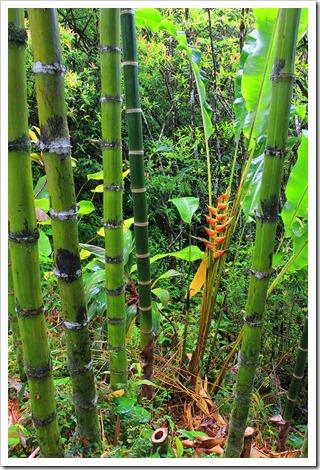 130711_Hana_Highway_Garden_of_Eden_089