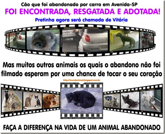 animais-abandonados_thumb[1]