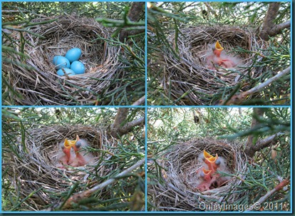 0512baby robin collage
