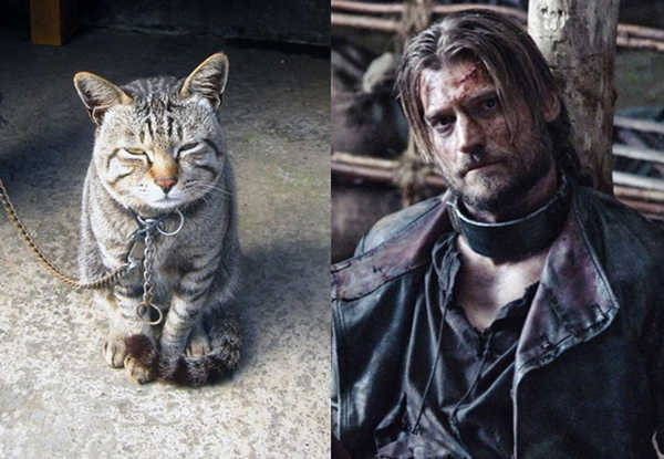 E se os personagens de Game of Thrones fossem gatos 6