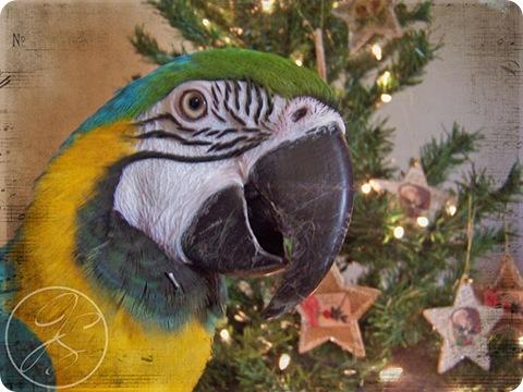 Pili_Star_Ornaments