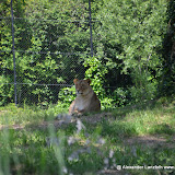 Safaripark_130527-020.JPG