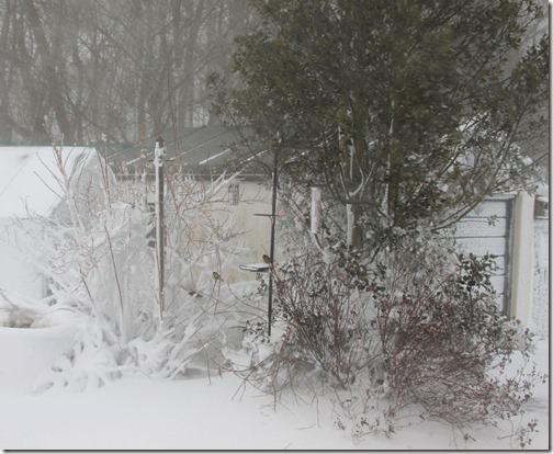 3-snow