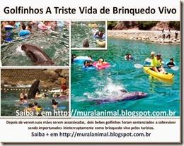 Golfinhos A Triste Vida de Brinquedo Vivo_thumb[1]