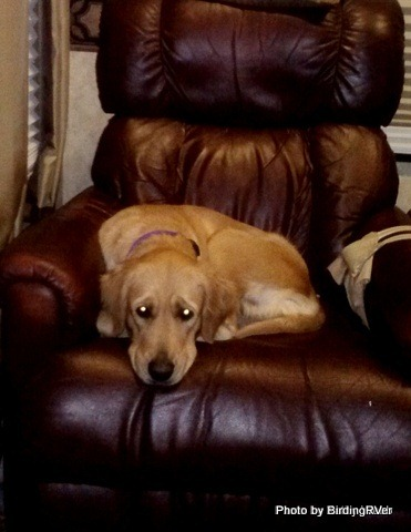 Molly in chair