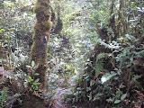 Forest trail on Gunung Sago (Daniel Quinn, September 2011)