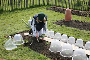 Original Victorian Bell - Planting out strawberries